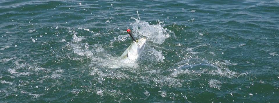 Strike-Zone-Robbins-Island-Blue-Fish